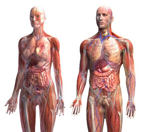Атлас анатомия органы тела